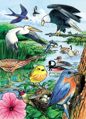 North American Birds Tray Puzzle 35 Pieces